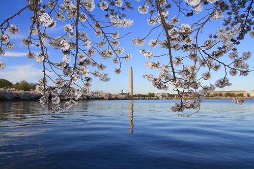 Cherry Blossom's Peak