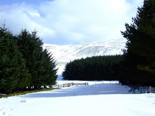 snowy Pentlands 011