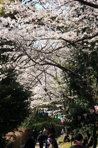 浜松城公園-Hamamatsu castle park