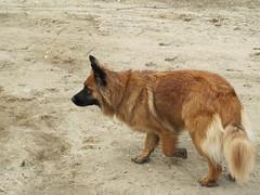 Suzee! (jnoc) Tags: dog dogs montague montagueplains