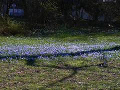 Die Blaue Blume - en masse