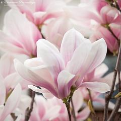 Yalta_spring_17