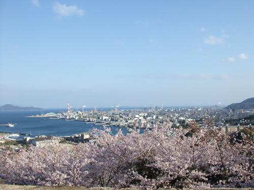 大竹 亀居公園 桜 画像 17