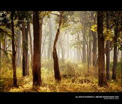 Beautiful Morning @ Bandipur National Park (Smevin Paul - Thrisookaran !! www.smevin.com) Tags: