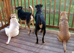 4dogs_butts_4710b