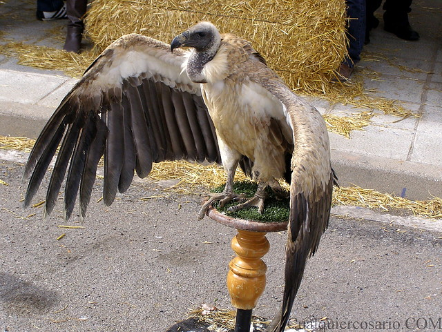 Aves extraordinarias II Toma II