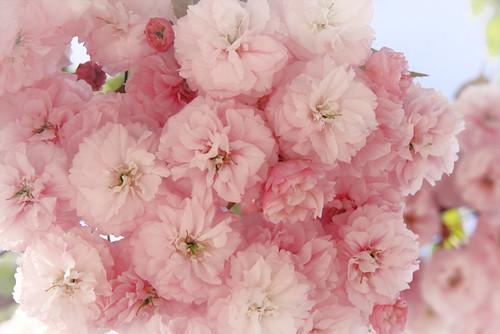 Flores 1.0