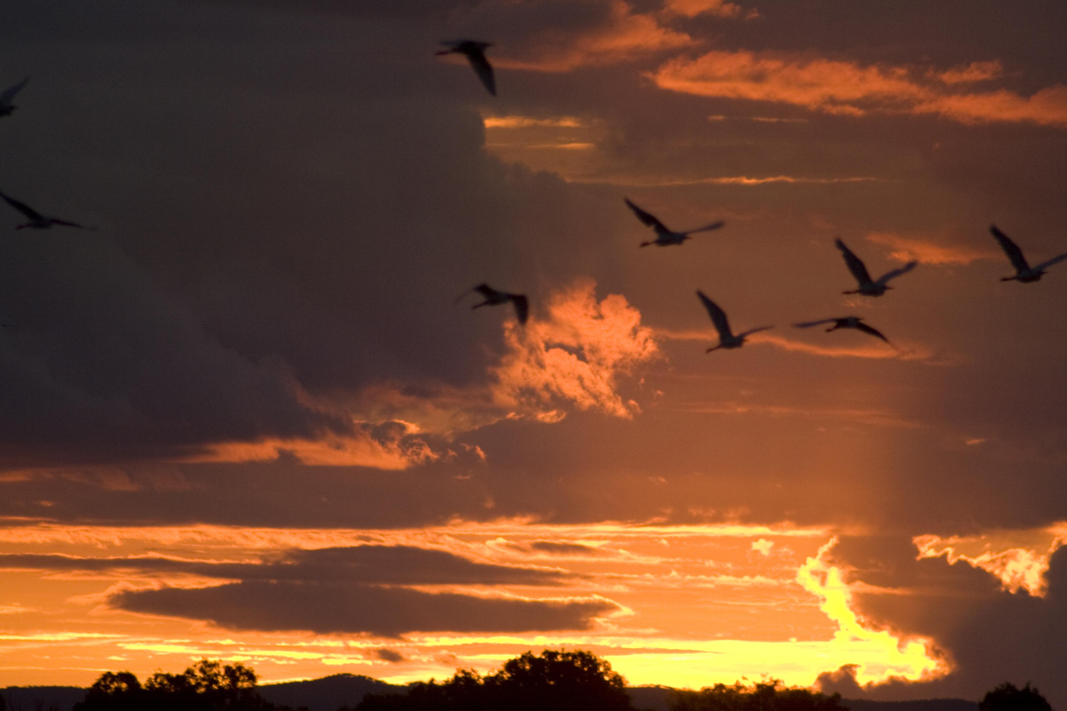 「夕日フリー画像」の画像検索結果