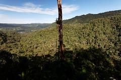 baudchon-baluchon-mindo-foret-equatoriale-18