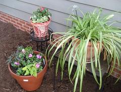 charleston garden pots