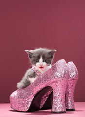 (brhomnew) Tags: pink cat shoes