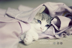 Baby we can go no where, but UP. (Fatemah.) Tags: old light pets animals canon one flickr natural explore kitties month frontpage colorz dashki