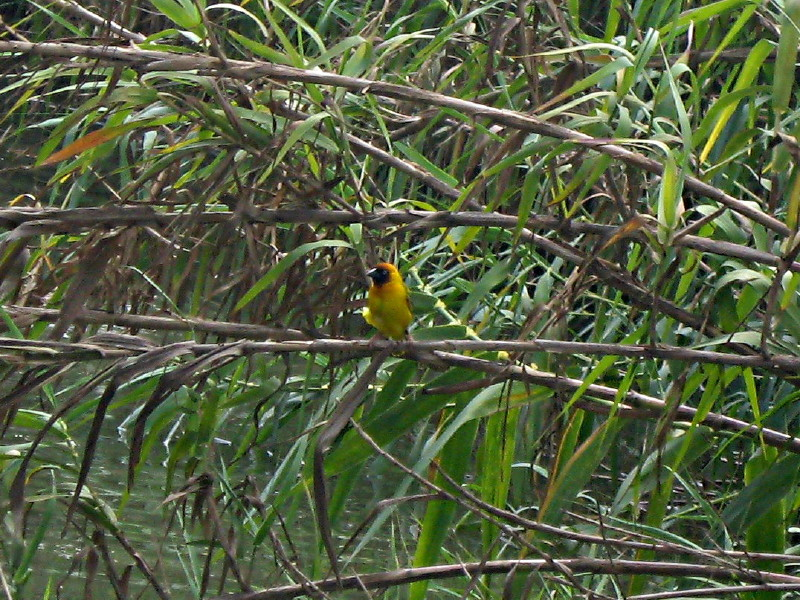 01-05-2010-yellow-bird