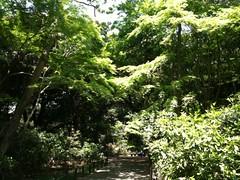森に来ています。目黒の自然教育園。