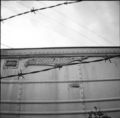 seattle blackandwhite film square greatdane barbedwire ballard trailer ilfordxp2400 dianamini bv042910