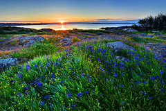 Heaven Whispers Victoria British Columbia (Ireena Eleonora Worthy) Tags: light canada beautiful sunrise nikon bc britishcolumbia victoria vancouverisland springflowers cattlepoint d700 mygearandmepremium