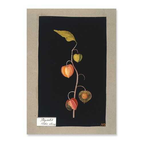 Botanical Paper Collage