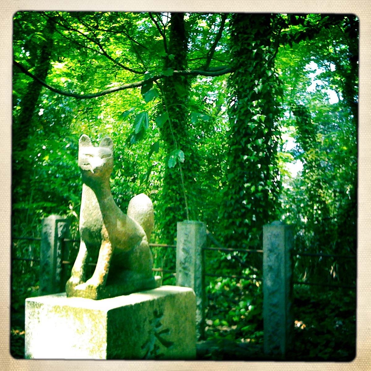 fox messenger