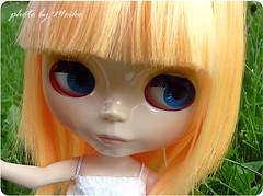 fanfan (Blythe Simply Mango)
