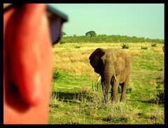 Begegnung in der Savanne