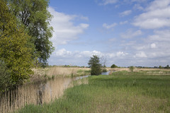 _MG_4845 (Ferry Streng) Tags: nes weerribben kamperland hoogspanningskabels