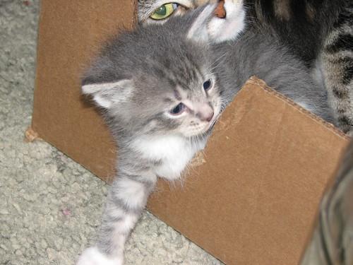Kittens 5-16-10 002