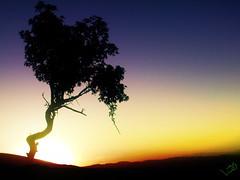 Sunset or Sunrise? (A H M A D I) Tags: sunset sun mountain tree nature jafar watcher ahmadi         naturewatcher