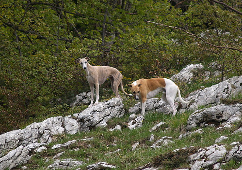 Monte Baldo Kuki & Quentin P5222703