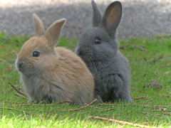 Two's company (Nature-as-is) Tags: babies rabbits uvic victoriabc