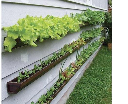 rain-gutter-garden-repurposed-diy
