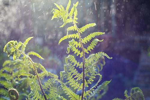 watering...56/365