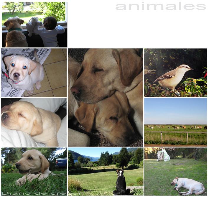 La vuelta al mundo: animales
