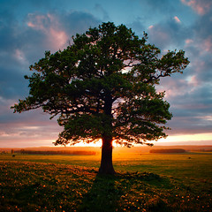 Lone Tree Standing (lichtmaedel) Tags: sunset sun tree clouds square oak eiche peene solitr