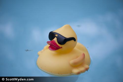 Duckmester