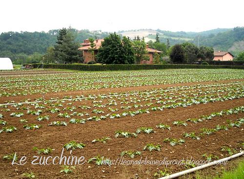 Verso-Farneto-le-zucchine