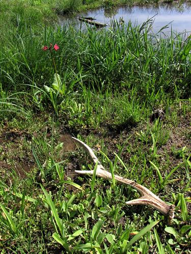 2010-5-28saku-BiotopeGarden