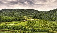 DeFosse Vineyard