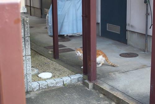 Today's Cat@2010-06-03