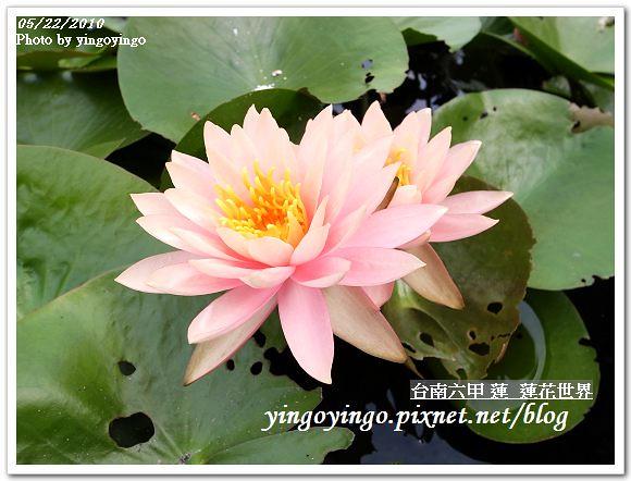 蓮花世界R0012561