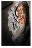 Leoposas Seven Silences Tattoo