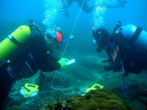 澎湖東嶼坪工作假期, 潛水志工在海下進行珊瑚礁總體檢, 記錄海底的健康狀況並享受潛水樂趣
