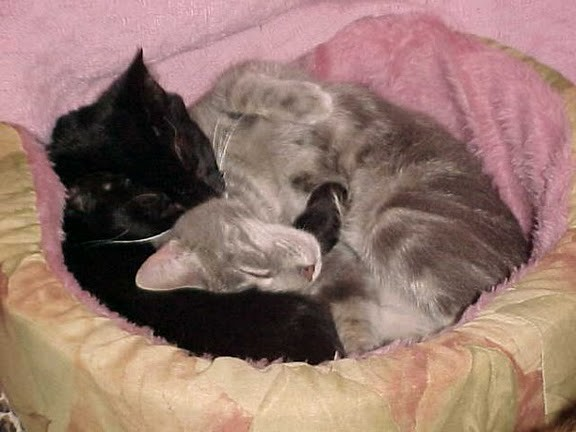 cute senior cats snuggling