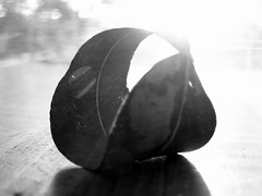 solar lit... (YAZMDG (16,000 images)) Tags: bw black leaves sepia dark studio moss lowlight noir gloomy y noiretblanc tint nb seeds fungi sombre bark nsw ambient lichen blackout pods florafauna yaz obscure obscur melancholic absence shadowy melancholie northernrivers lacunae lacune yazminamicheledegaye yazmdg obscuritee ystudio