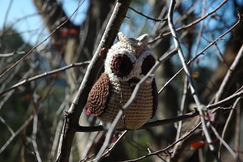 Owl Wings 7