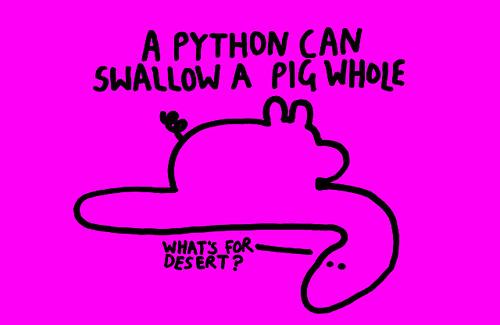 Питон может проглотить свинью целиком. Что у нас сегодня на дессерт?