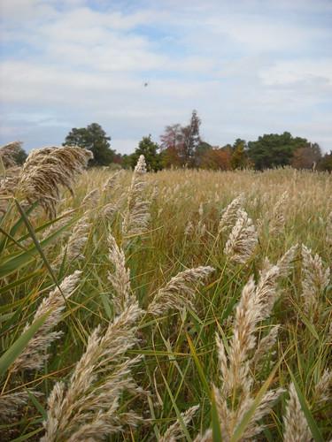 Longwood October 2010 028