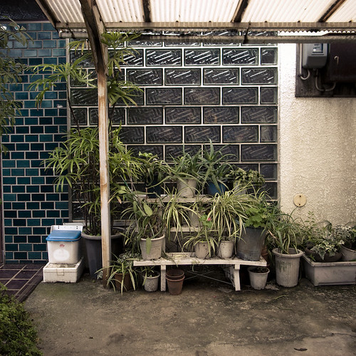 Tile Glass Brick Plants