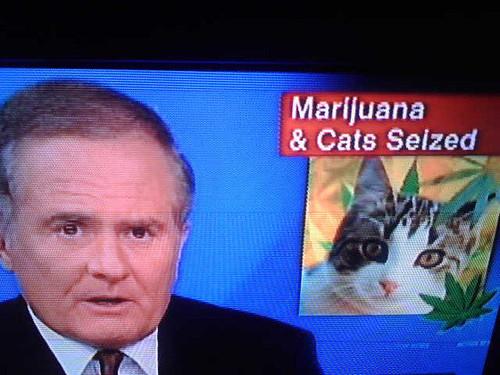 CATS-MARIJUANA