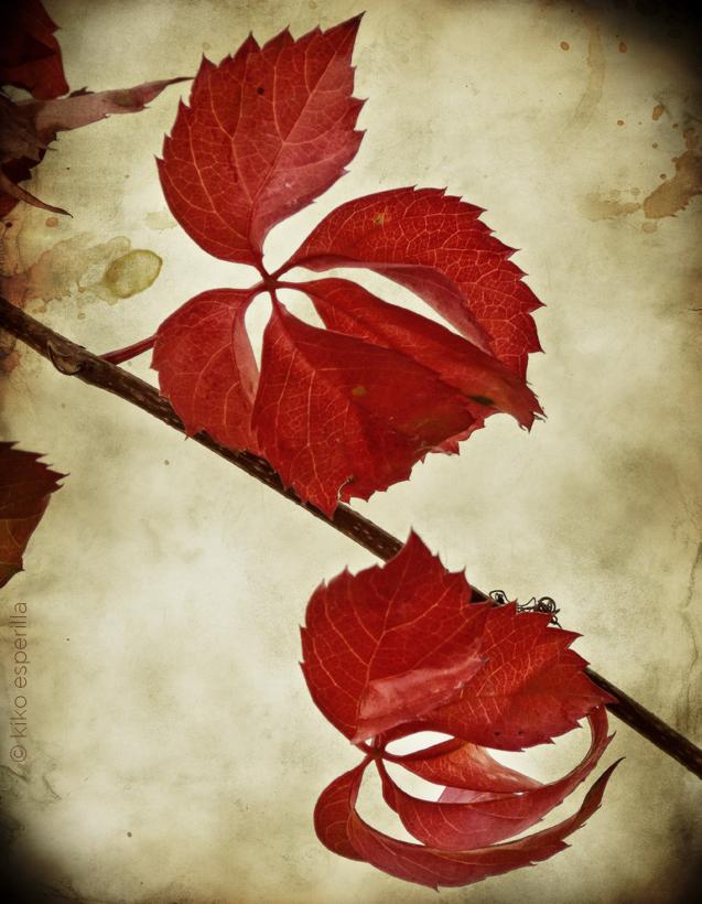 Carta de otoño