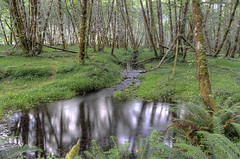 Crystal Clear Forest Pool (Nola Nate) Tags: olympicnationalpark washington hohrainforest rainforest forest woods nature ibeauty trees water nationalpark reflection green